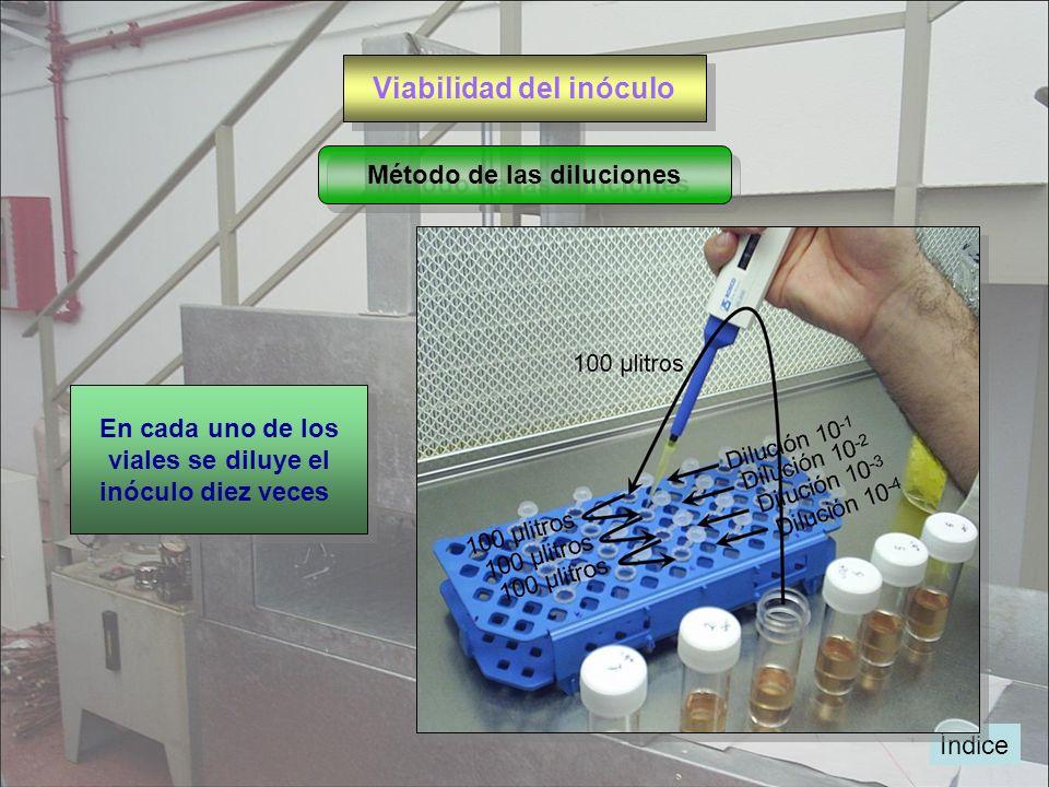 Viabilidad del inóculo Índice Método de las diluciones En cada uno de los viales se diluye el inóculo diez veces En cada uno de los viales se diluye e