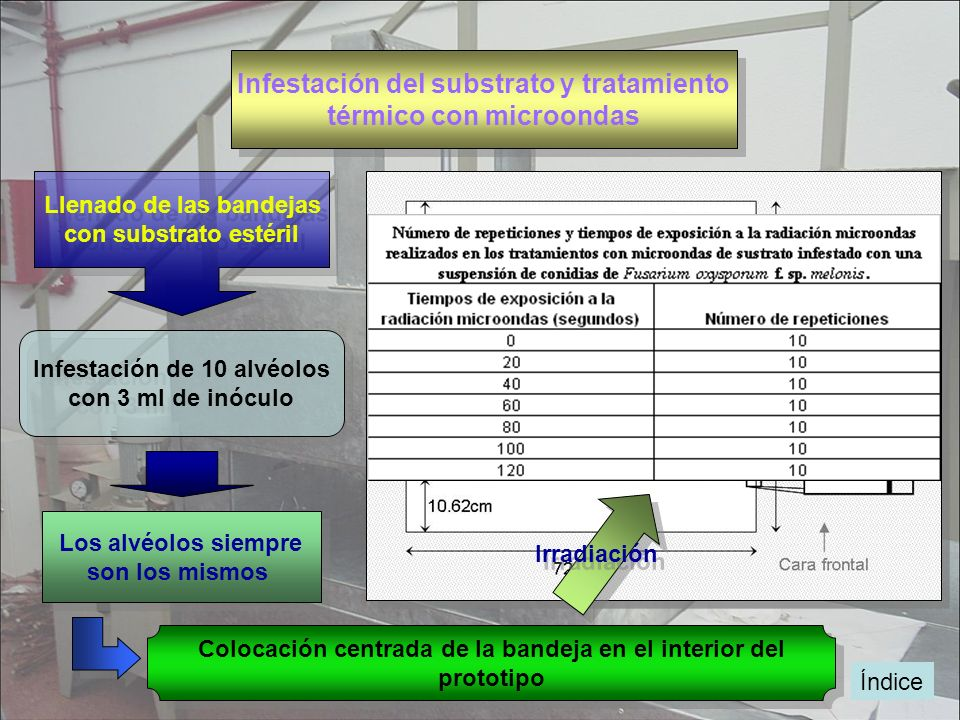 Infestación del substrato y tratamiento térmico con microondas Infestación del substrato y tratamiento térmico con microondas Infestación de 10 alvéol