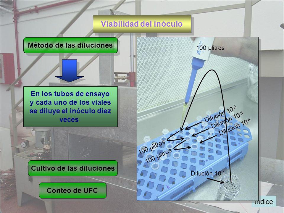 Viabilidad del inóculo Método de las diluciones En los tubos de ensayo y cada uno de los viales se diluye el inóculo diez veces En los tubos de ensayo