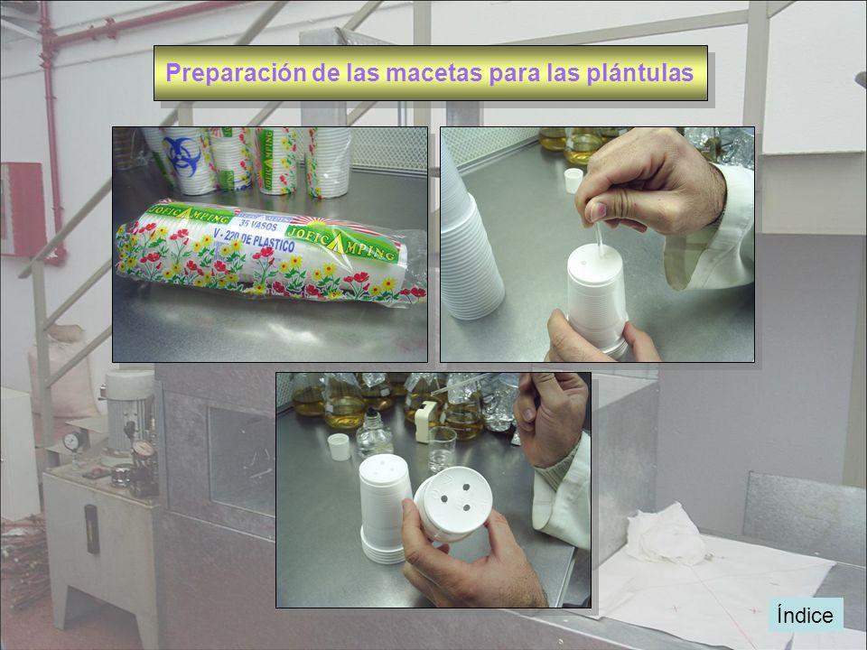 Índice Preparación de las macetas para las plántulas