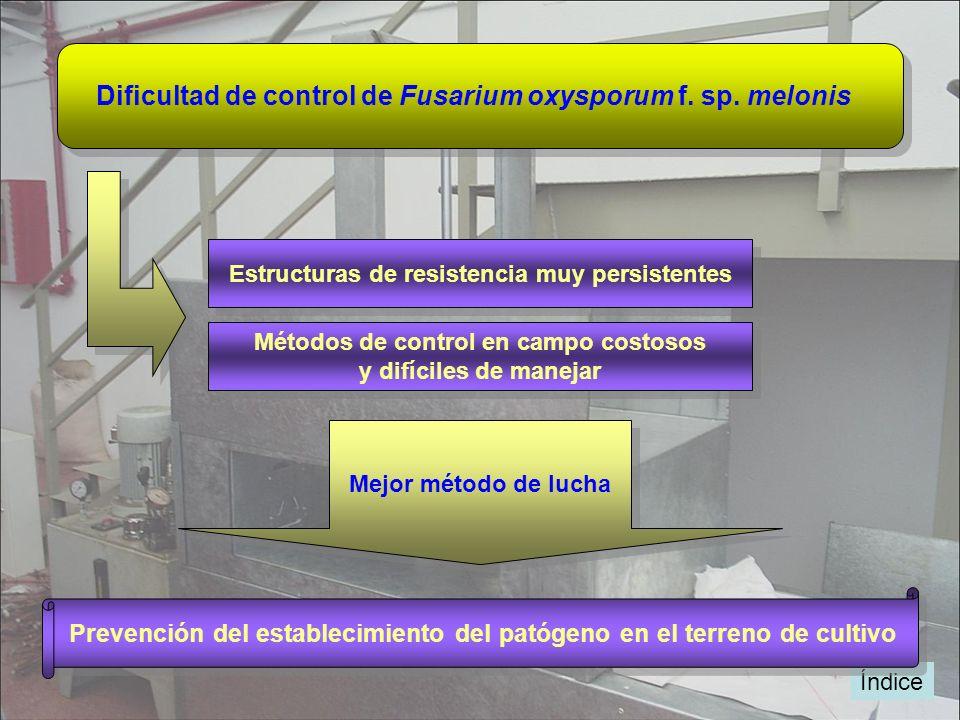 Dificultad de control de Fusarium oxysporum f. sp. melonis Mejor método de lucha Índice Estructuras de resistencia muy persistentes Métodos de control