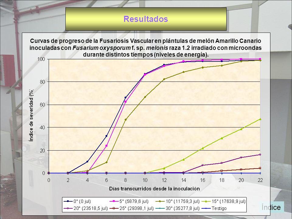 Índice Curvas de progreso de la Fusariosis Vascular en plántulas de melón Amarillo Canario inoculadas con Fusarium oxysporum f. sp. melonis raza 1.2 i