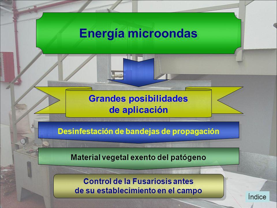 Índice Energía microondas Grandes posibilidades de aplicación Grandes posibilidades de aplicación Desinfestación de bandejas de propagación Control de