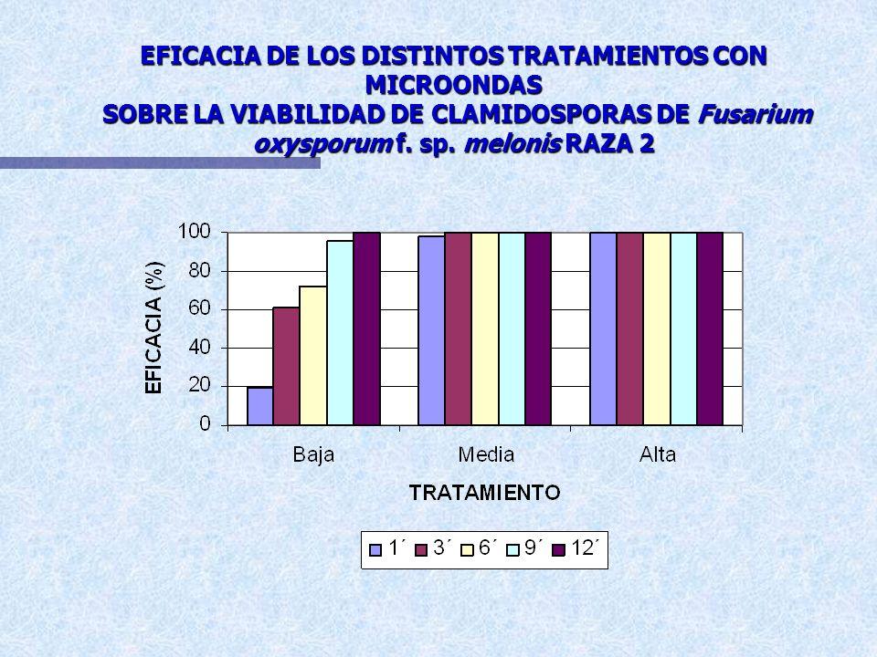 EFICACIA DE LOS DISTINTOS TRATAMIENTOS CON MICROONDAS SOBRE LA VIABILIDAD DE LAS CLAMIDOSPORAS DE Fusarium oxysporum f. sp. melonis RAZA 2