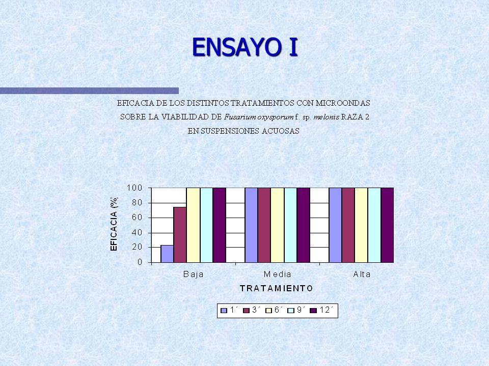 EFICACIA DE LOS DISTINTOS TRATAMIENTOS CON MICROONDAS SOBRE LA VIABILIDAD Fusarium oxysporum f. sp. melonis Raza 2 EN SUSPENSIONES ACUOSAS ENSAYO I