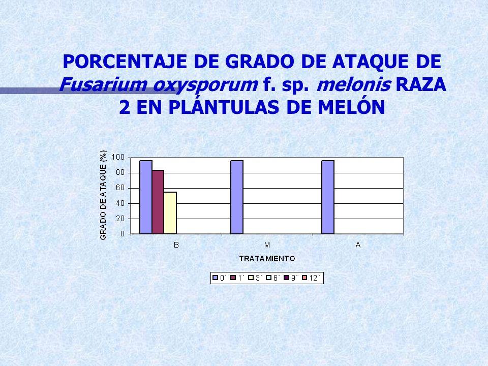 PORCENTAJE DE GRADO DE ATAQUE DE Fusarium oxysporum f. sp. melonis RAZA 2 EN PLÁNTULAS DE MELÓN