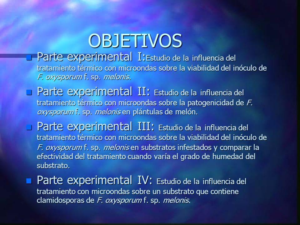 CONCLUSIONES PARTE EXPERIMENTAL I 3.- En los tratamientos de 1 y 3 minutos a media y alta potencia, así como en los de 6, 9 y 12 minutos (baja, media y alta potencia) se consigue la erradicación del inóculo.