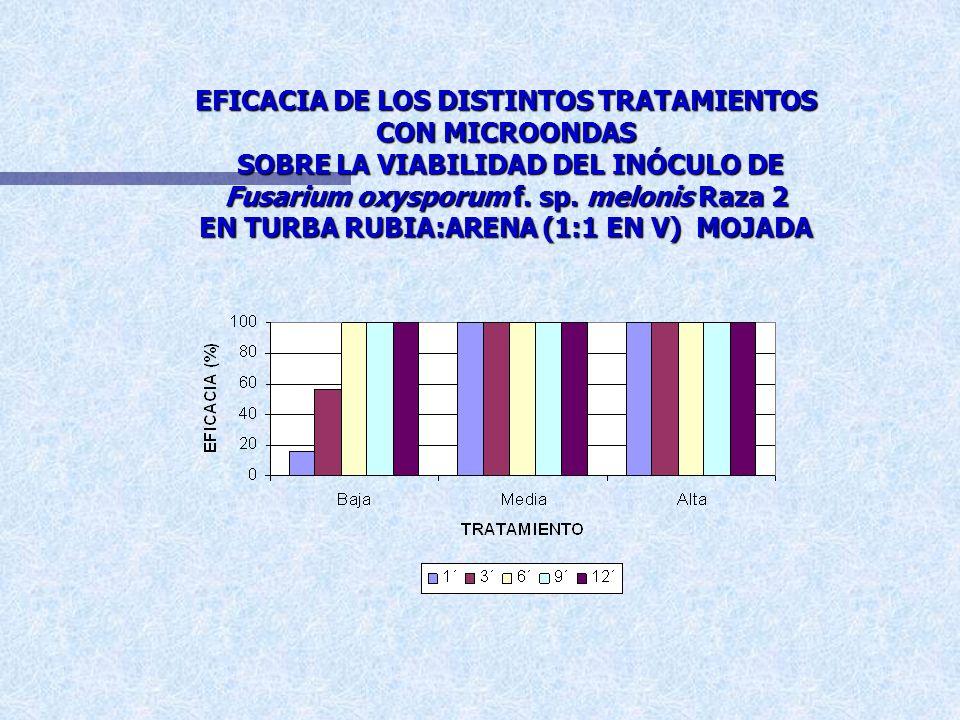 EFICACIA DE LOS DISTINTOS TRATAMIENTOS CON MICROONDAS SOBRE LA VIABILIDAD DE Fusarium oxysporum f. sp. melonis RAZA 2 EN TURBA RUBIA:ARENA (1:1 EN V)