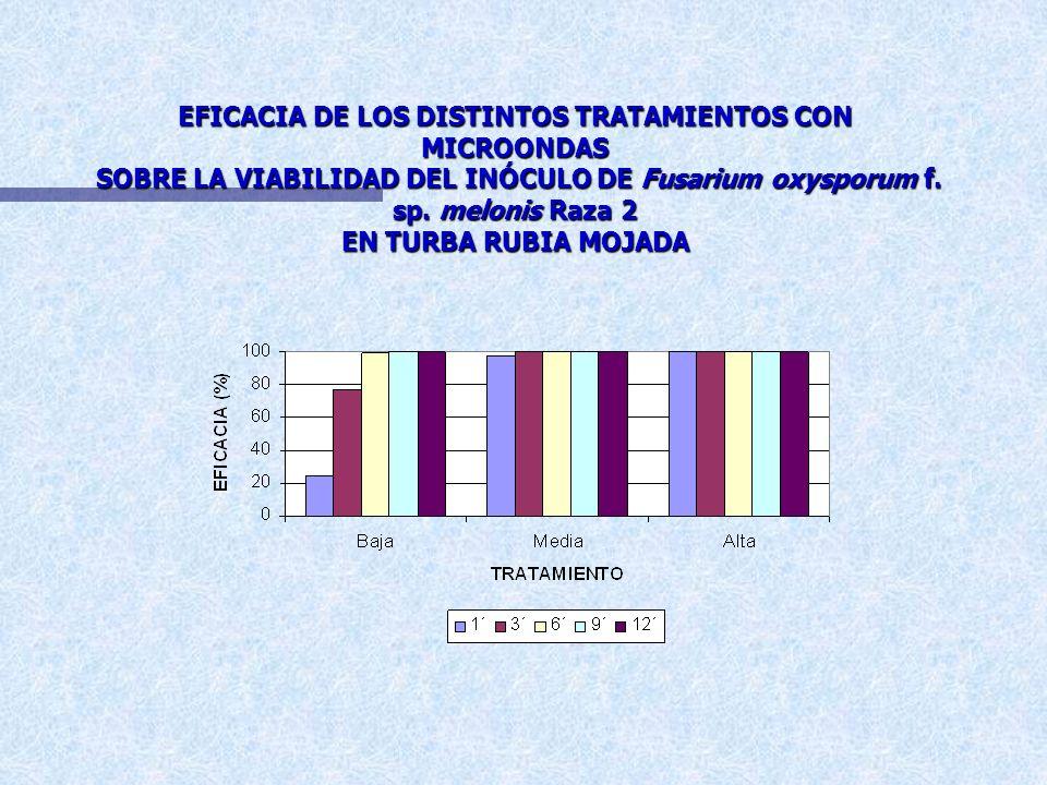 EFICACIA DE LOS DISTINTOS TRATAMIENTOS CON MICROONDAS SOBRE LA VIABILIDAD DE Fusarium oxysporum f. sp. melonis RAZA 2 EN TURBA RUBIA MOJADA
