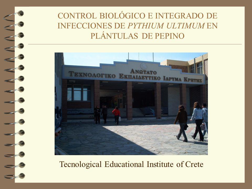 CONTROL BIOLÓGICO E INTEGRADO DE INFECCIONES DE PYTHIUM ULTIMUM EN PLÁNTULAS DE PEPINO Tecnological Educational Institute of Crete