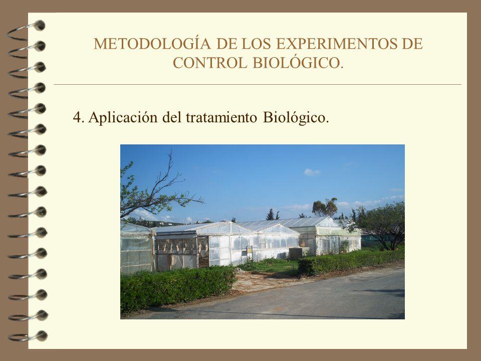 METODOLOGÍA DE LOS EXPERIMENTOS DE CONTROL BIOLÓGICO. 3. Inoculación de las semillas con los antagonistas. 3,5 g semillas dosis de turba-bacteria 466