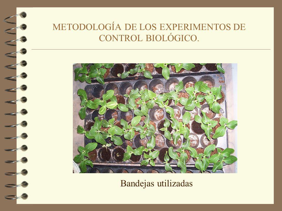 METODOLOGÍA DE LOS EXPERIMENTOS DE CONTROL BIOLÓGICO. 4. Aplicación del tratamiento Biológico.