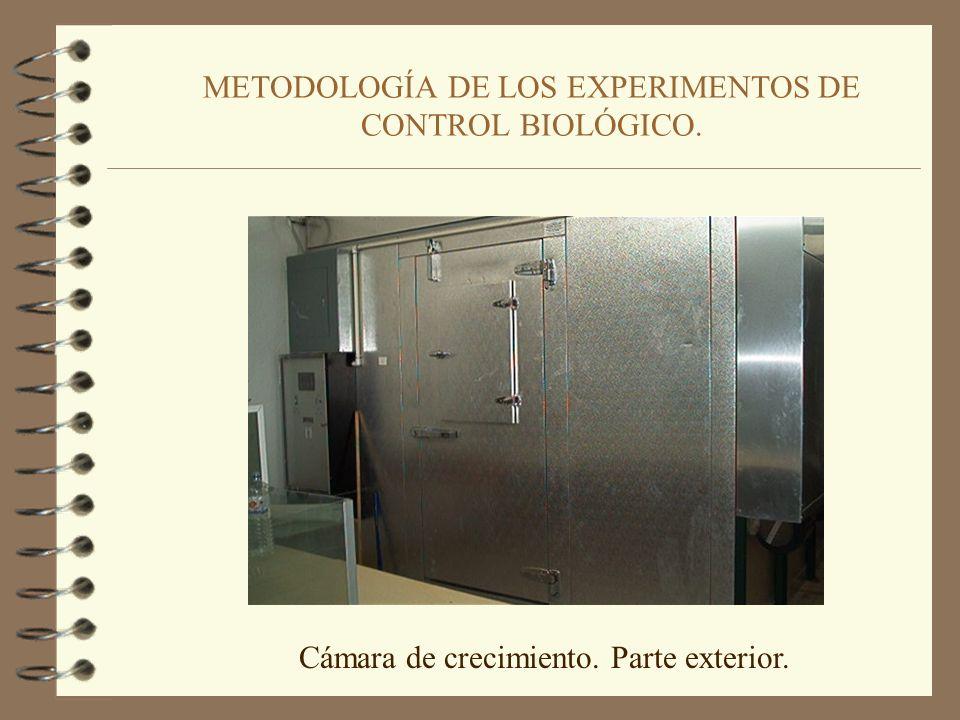 METODOLOGÍA DE LOS EXPERIMENTOS DE CONTROL BIOLÓGICO. Bandejas utilizadas