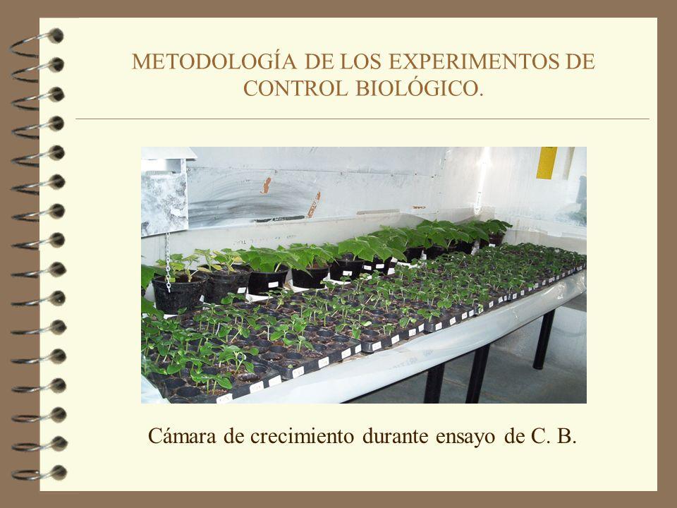METODOLOGÍA DE LOS EXPERIMENTOS DE CONTROL BIOLÓGICO. Cámara de crecimiento. Parte exterior.