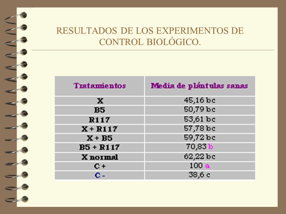 METODOLOGÍA DE LOS EXPERIMENTOS DE CONTROL BIOLÓGICO. Cámara de crecimiento durante ensayo de C. B.