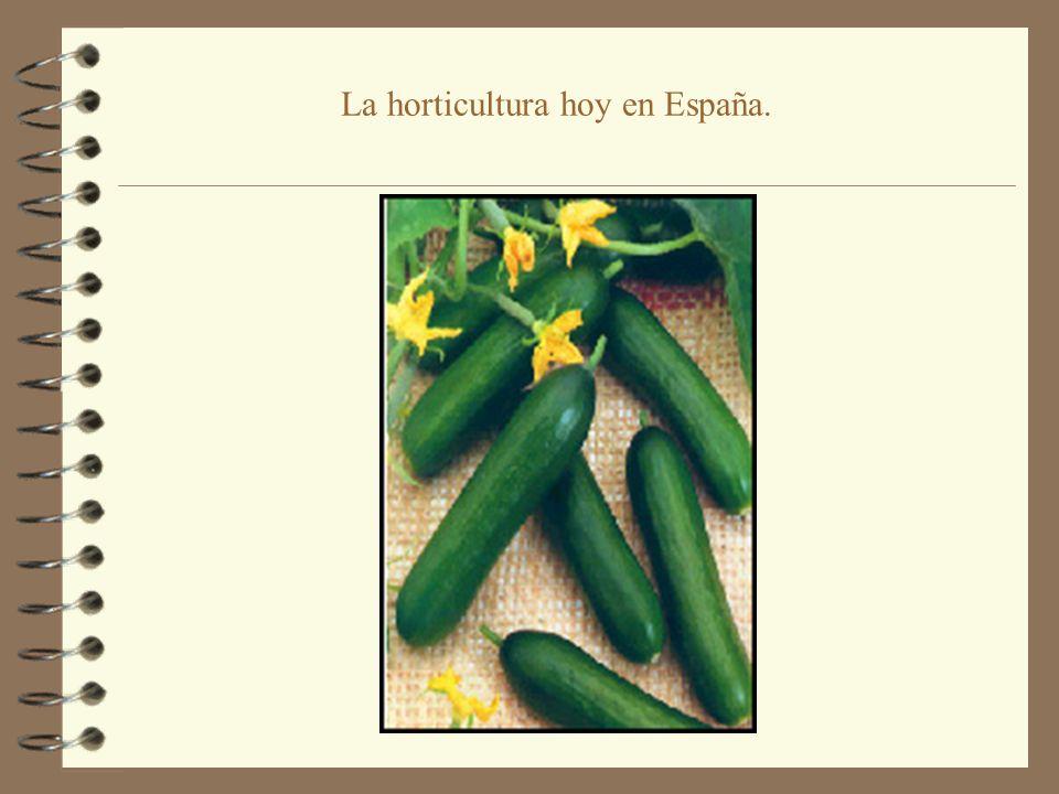 La horticultura hoy en España.