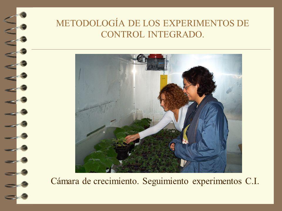 METODOLOGÍA DE LOS EXPERIMENTOS DE CONTROL INTEGRADO. 5. Aplicación del Control Integrado. 3,5 g de semilla 390 mg turba-bacteria 466 microlitros de P