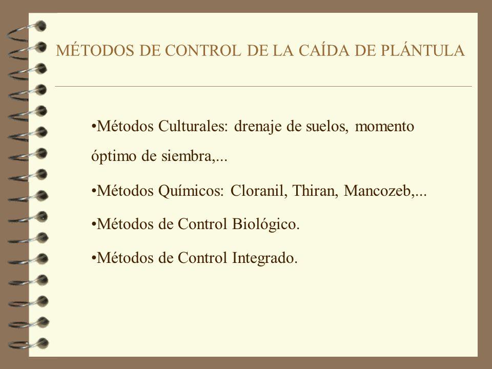 MÉTODOS DE CONTROL DE LA CAÍDA DE PLÁNTULA Métodos Culturales: drenaje de suelos, momento óptimo de siembra,...