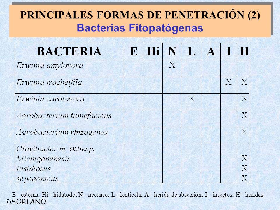 PRINCIPALES FORMAS DE PENETRACIÓN (2) Bacterias Fitopatógenas E= estoma; Hi= hidatodo; N= nectario; L= lenticela; A= herida de abscisión; I= insectos;