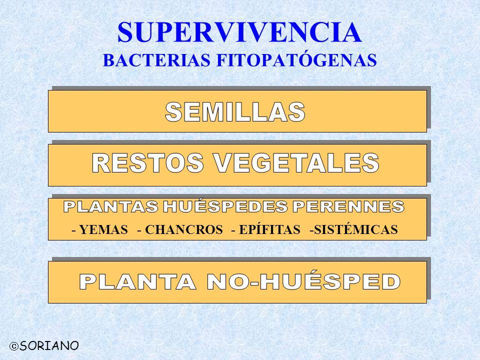 SUPERVIVENCIA BACTERIAS FITOPATÓGENAS - YEMAS - CHANCROS - EPÍFITAS -SISTÉMICAS SORIANO
