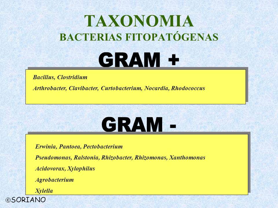 TAXONOMIA BACTERIAS FITOPATÓGENAS SORIANO Erwinia, Pantoea, Pectobacterium Pseudomonas, Ralstonia, Rhizobacter, Rhizomonas, Xanthomonas Acidovorax, Xy