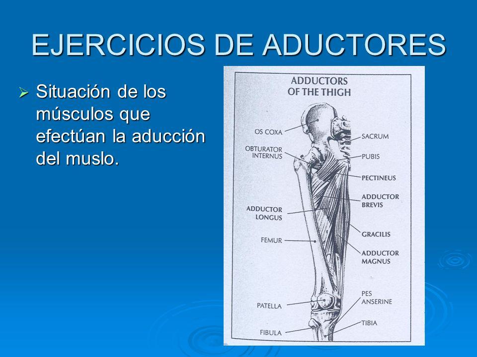 EJERCICIOS DE ADUCTORES Situación de los músculos que efectúan la aducción del muslo. Situación de los músculos que efectúan la aducción del muslo.