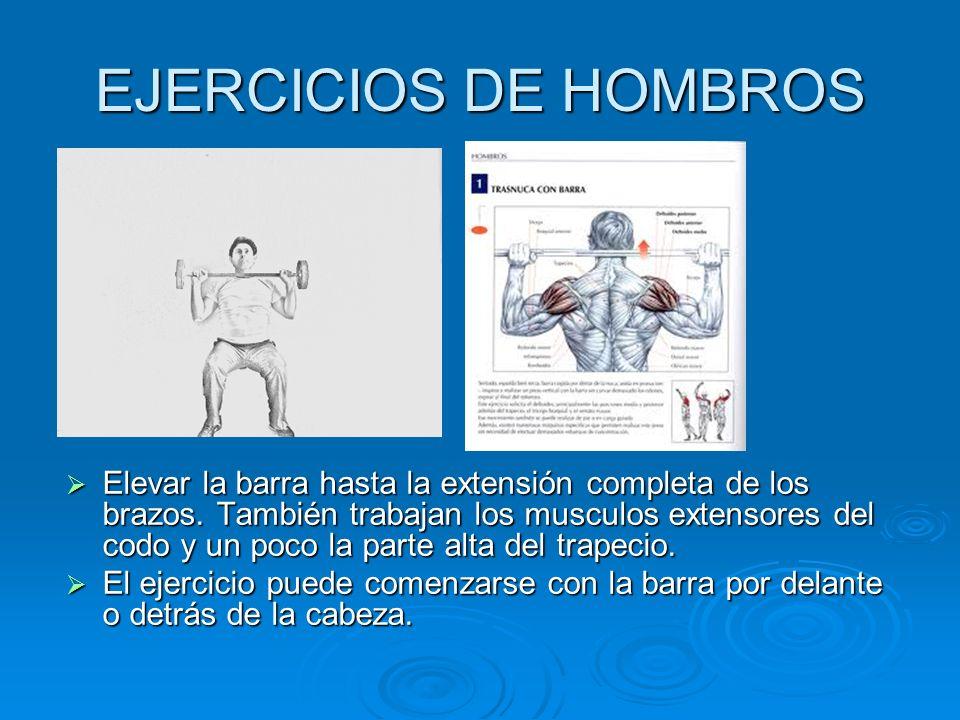 EJERCICIOS DE HOMBROS Elevar la barra hasta la extensión completa de los brazos. También trabajan los musculos extensores del codo y un poco la parte