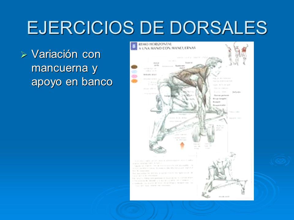 EJERCICIOS DE DORSALES Variación con mancuerna y apoyo en banco Variación con mancuerna y apoyo en banco