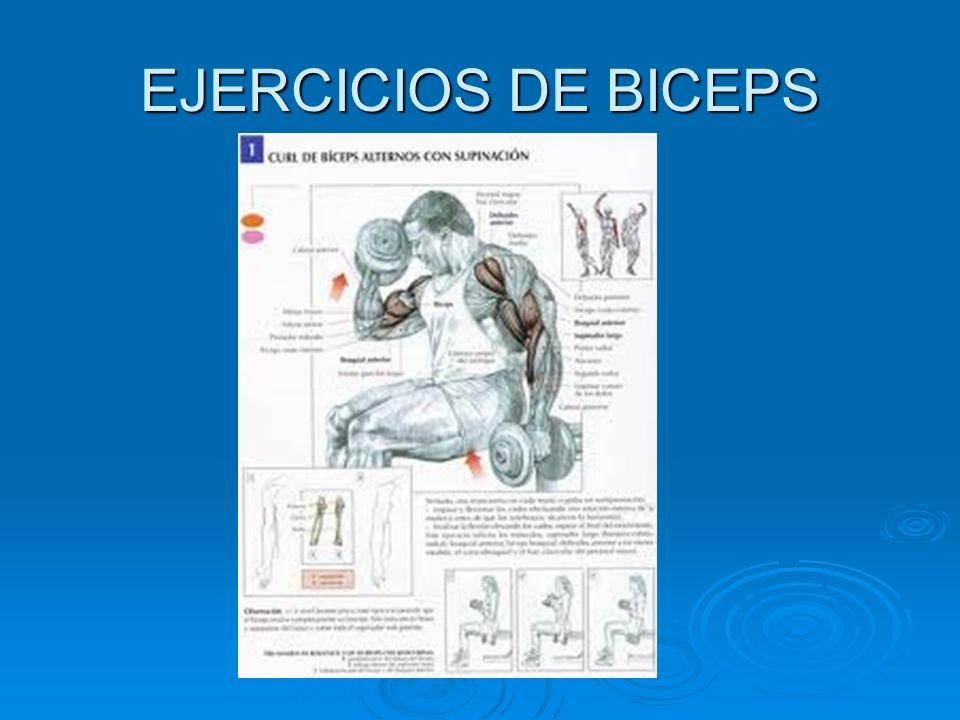 EJERCICIOS DE BICEPS