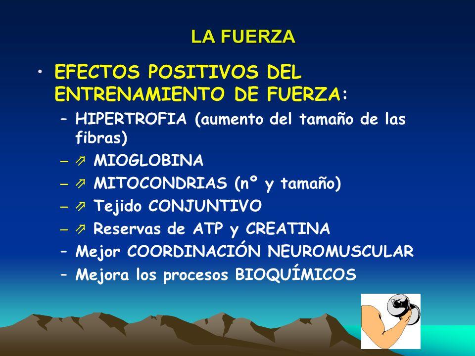 LA FUERZA EFECTOS POSITIVOS DEL ENTRENAMIENTO DE FUERZA: –HIPERTROFIA (aumento del tamaño de las fibras) – MIOGLOBINA – MITOCONDRIAS (nº y tamaño) – T