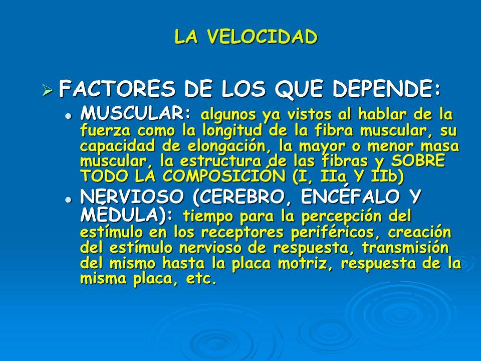 LA VELOCIDAD FACTORES DE LOS QUE DEPENDE: FACTORES DE LOS QUE DEPENDE: MUSCULAR: algunos ya vistos al hablar de la fuerza como la longitud de la fibra
