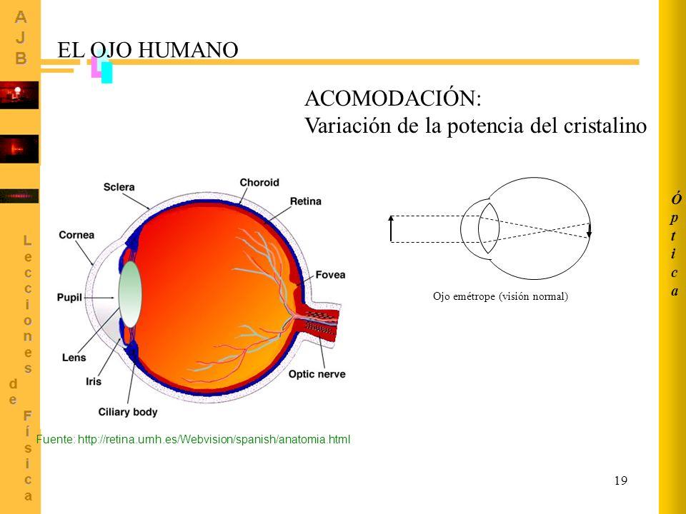 19 Ojo emétrope (visión normal) ACOMODACIÓN: Variación de la potencia del cristalino Fuente: http://retina.umh.es/Webvision/spanish/anatomia.html EL O