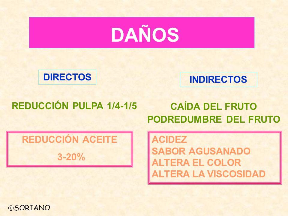 DAÑOS DIRECTOS INDIRECTOS REDUCCIÓN PULPA 1/4-1/5 REDUCCIÓN ACEITE 3-20% CAÍDA DEL FRUTO PODREDUMBRE DEL FRUTO ACIDEZ SABOR AGUSANADO ALTERA EL COLOR