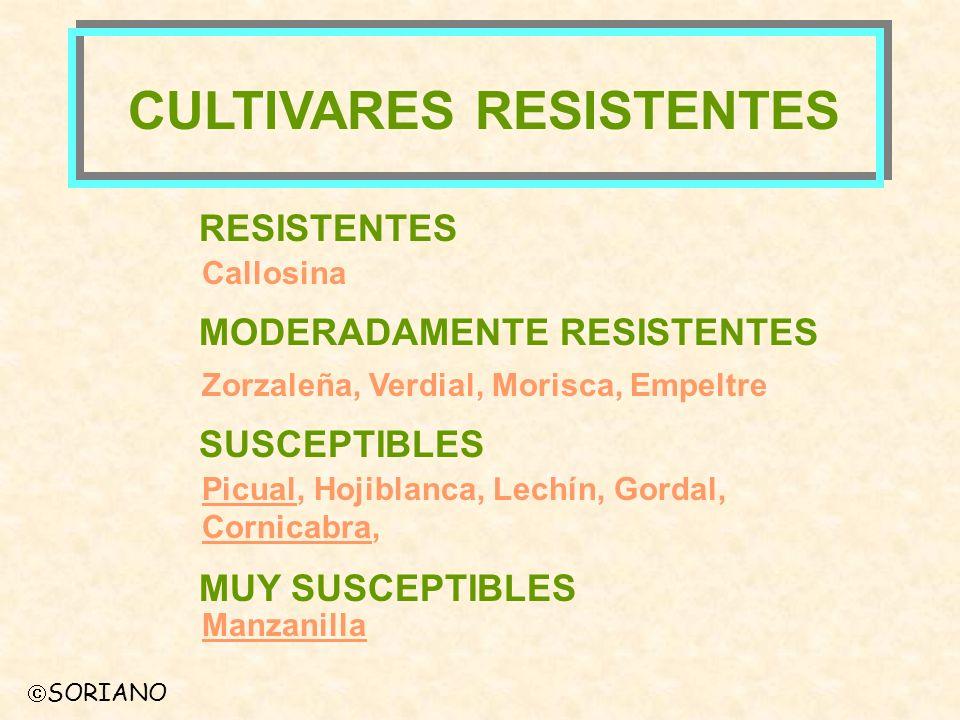 SORIANO CULTIVARES RESISTENTES RESISTENTES Callosina MODERADAMENTE RESISTENTES Zorzaleña, Verdial, Morisca, Empeltre SUSCEPTIBLES Picual, Hojiblanca,