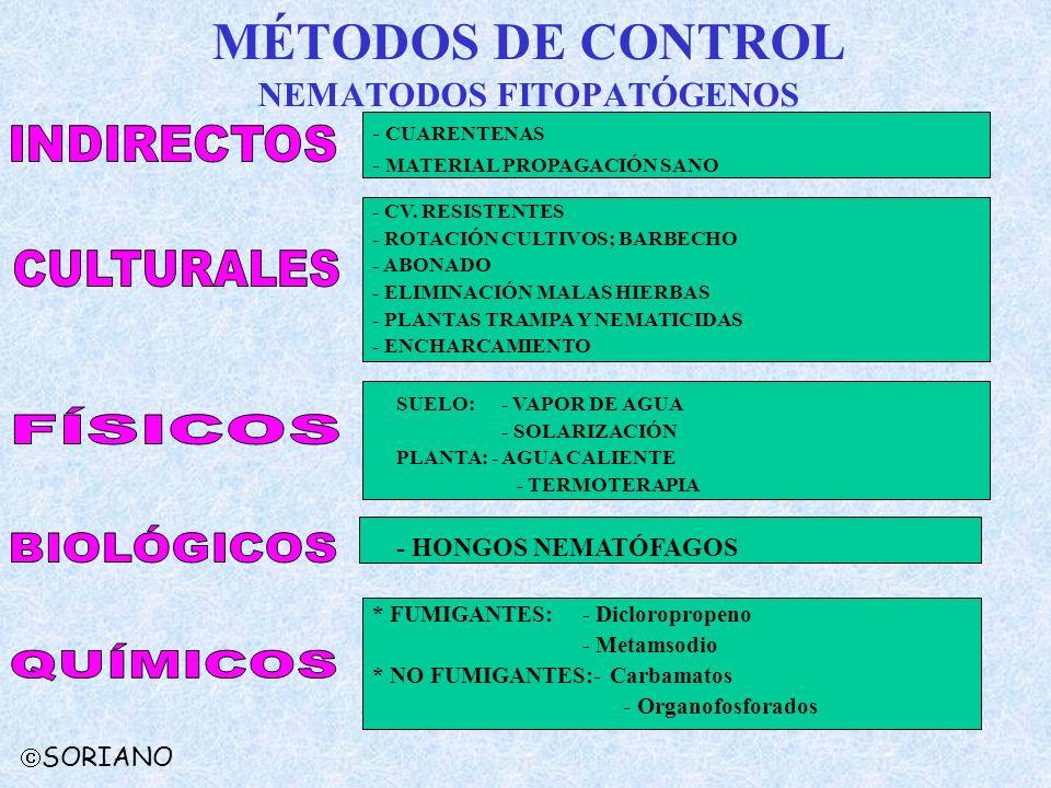 MÉTODOS DE CONTROL NEMATODOS FITOPATÓGENOS * FUMIGANTES:- Dicloropropeno - Metamsodio * NO FUMIGANTES:- Carbamatos - Organofosforados - CUARENTENAS -