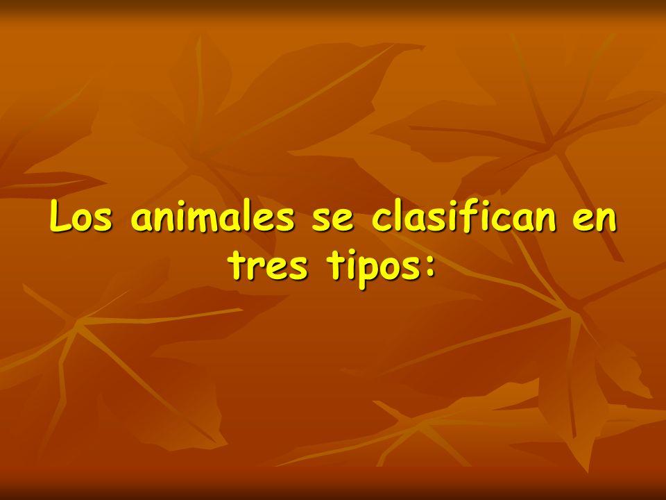 Según su alimentación: Los animales carnívoros son los que se alimentan de la carne de otros animales.