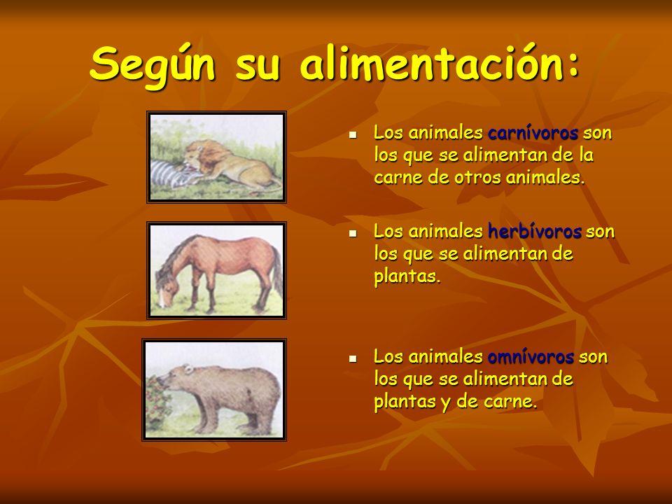 Según su alimentación: Los animales carnívoros son los que se alimentan de la carne de otros animales. Los animales carnívoros son los que se alimenta