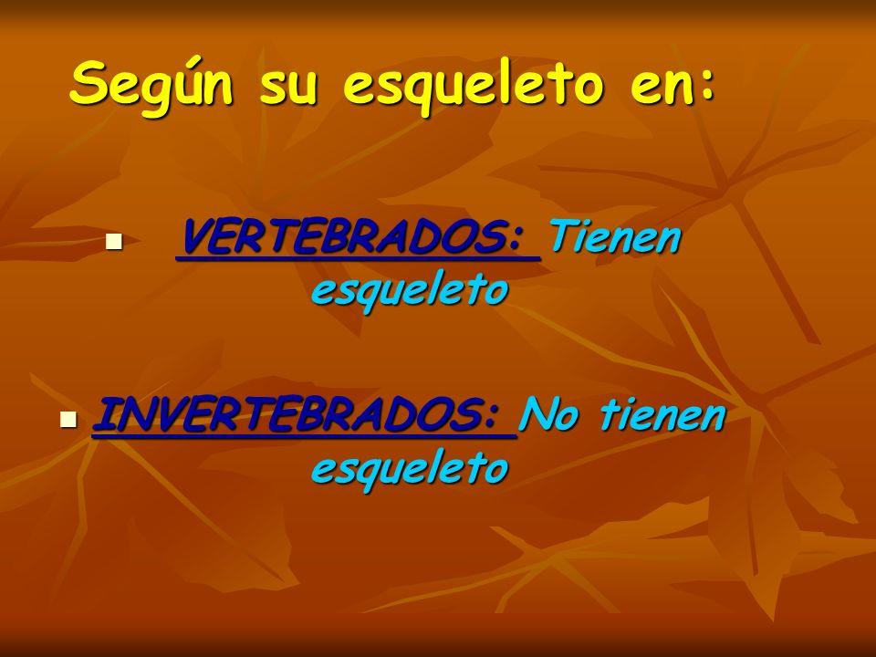 Según su esqueleto en: VERTEBRADOS: Tienen esqueleto VERTEBRADOS: Tienen esqueleto INVERTEBRADOS: No tienen esqueleto INVERTEBRADOS: No tienen esquele