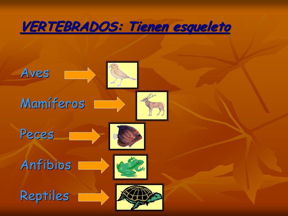 INVERTEBRADOS No tienen esqueleto INVERTEBRADOS No tienen esqueleto Araña CaracolMariposa