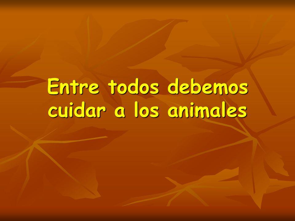 Entre todos debemos cuidar a los animales