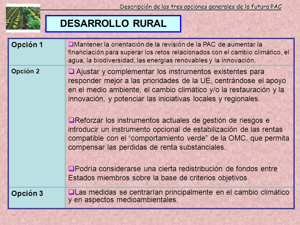 Descripción de las tres opciones generales de la futura PAC DESARROLLO RURAL Opción 1 Mantener la orientación de la revisión de la PAC de aumentar la
