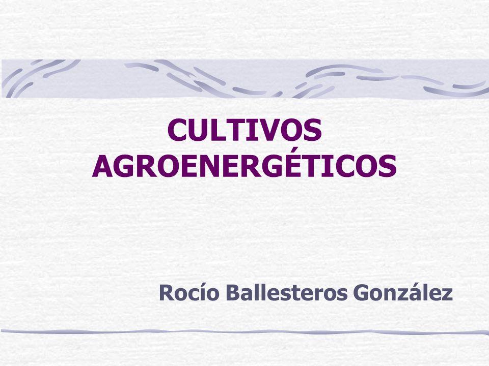 CULTIVOS AGROENERGÉTICOS Rocío Ballesteros González