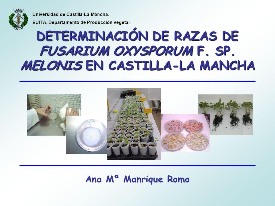 DETERMINACIÓN DE RAZAS DE FUSARIUM OXYSPORUM F. SP. MELONIS EN CASTILLA-LA MANCHA Ana Mª Manrique Romo Universidad de Castilla-La Mancha. EUITA. Depar