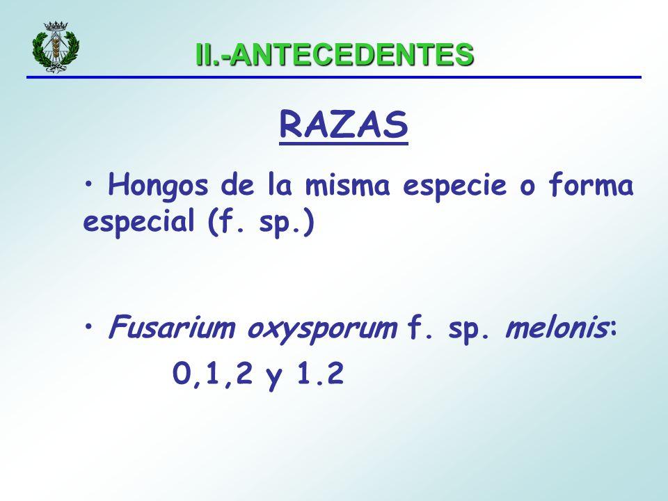 II.-ANTECEDENTES RAZAS Hongos de la misma especie o forma especial (f. sp.) Fusarium oxysporum f. sp. melonis: 0,1,2 y 1.2