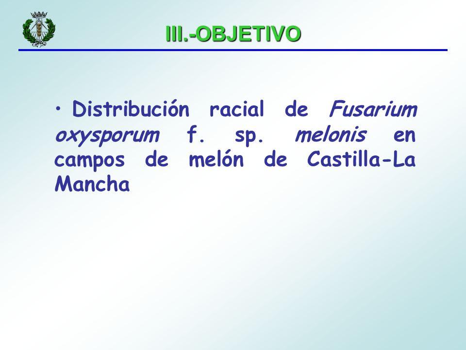 III.-OBJETIVO Distribución racial de Fusarium oxysporum f. sp. melonis en campos de melón de Castilla-La Mancha