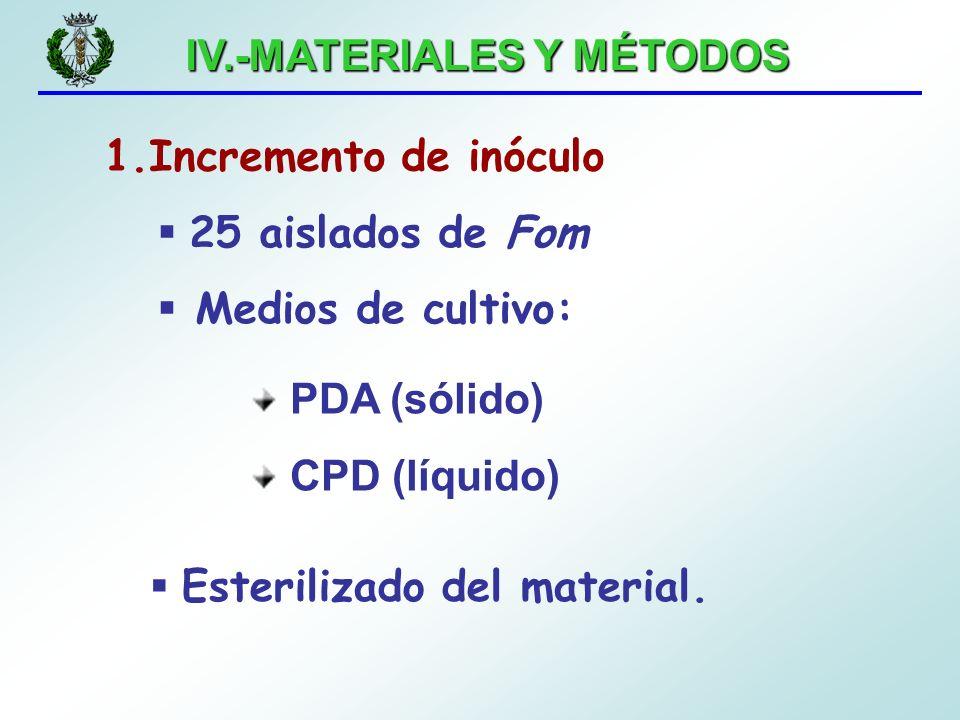 IV.-MATERIALES Y MÉTODOS 1.Incremento de inóculo 25 aislados de Fom Medios de cultivo: PDA (sólido) CPD (líquido) Esterilizado del material.