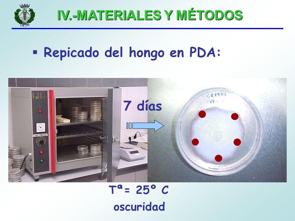 IV.-MATERIALES Y MÉTODOS 7 días Repicado del hongo en PDA: Tª= 25º C oscuridad