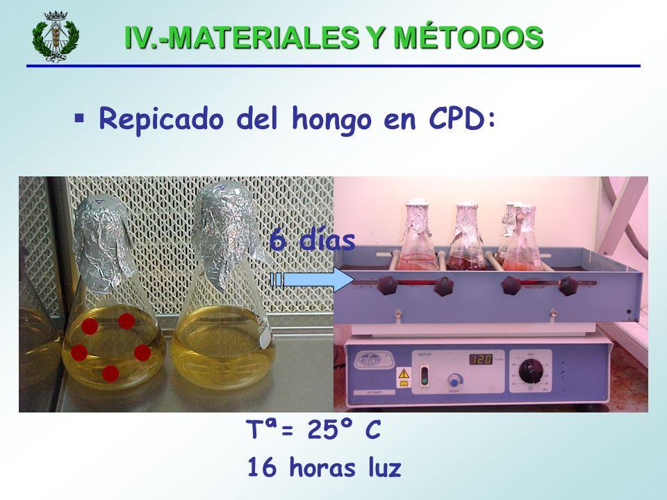IV.-MATERIALES Y MÉTODOS 6 días Repicado del hongo en CPD: Tª= 25º C 16 horas luz