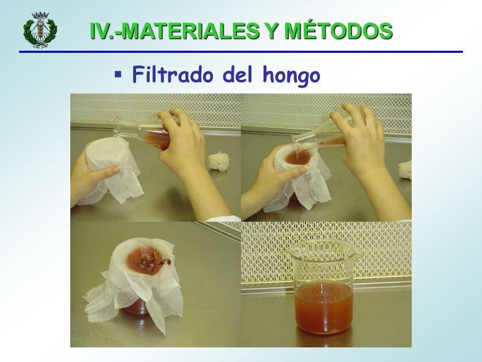 IV.-MATERIALES Y MÉTODOS Filtrado del hongo