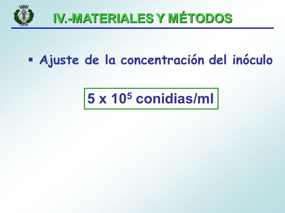 IV.-MATERIALES Y MÉTODOS Ajuste de la concentración del inóculo 5 x 10 5 conidias/ml